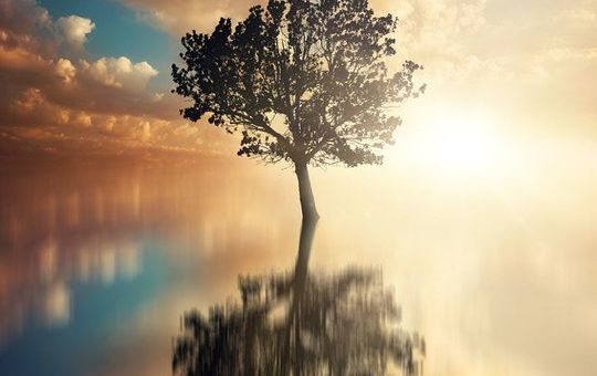 destiny   water reflections tree clouds   by stijn dijkstra